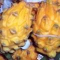 oválné; žluté; ovoce; poživatelný (jedlý); čerstvé