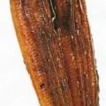 tiefgefroren; fisch; zubereitet; filetiert