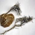 getrocknet; pflanzenteil; natürlich; marmor
