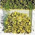Komposter  - noch nicht zusammengesetztes vollständig aus Stahldraht gefertigtes, quaderförmiges oben und unten    offenes Erzeugnis, bestehend aus  - - vier Seitenteilen, jeweils aus quadratischen,...