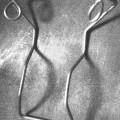 z oceli; z obecných kovů; z ocelového drátu; pružiny; výrobky…
