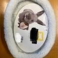 tessuti; maglieria; per animali; conigli; reversibile